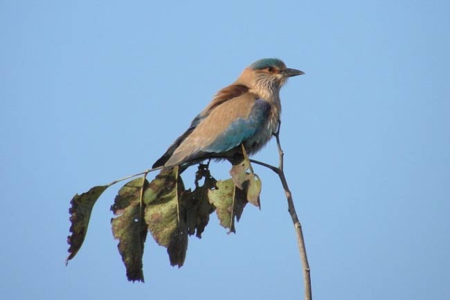 Bird Watching in Pench